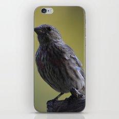 An Immature House Finch iPhone & iPod Skin