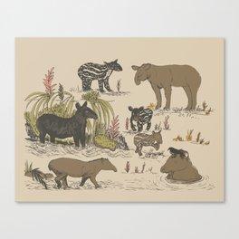 Tapirs Canvas Print