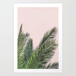 Blush palm Art Print