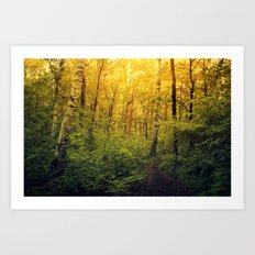 A walk in the forest Art Print