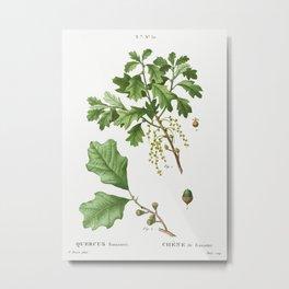 Bear oak, Quercus banisteri from Traité des Arbres et Arbustes que l'on cultive en France en pleine Metal Print
