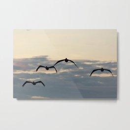 Pelicans in the Sky Metal Print