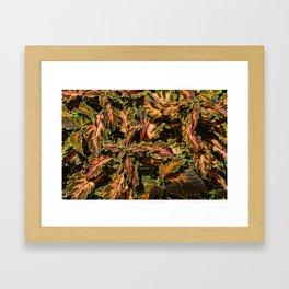 Coleus Foliage Framed Art Print