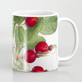 Bourgeau Rose (Rosa bourgeauiana) (1920) by Mary Vaux Walcott Coffee Mug