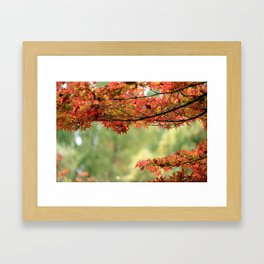 Japanese Maple Tree and Leaves in Fall Garden Photography Framed Art Print