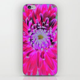 Crimson and Pink Cactus Dahlia Explosion iPhone Skin