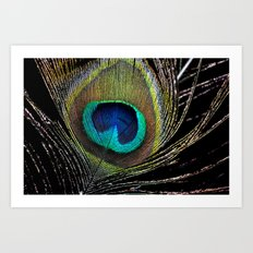 Peacock clothes Art Print