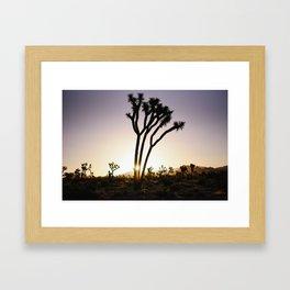 Joshua Tree Sunrise  Framed Art Print