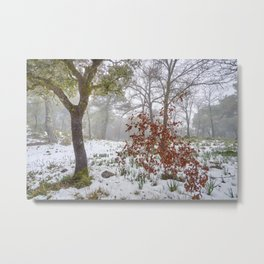 Foggy Oaks. Snowing Into The Woods Metal Print