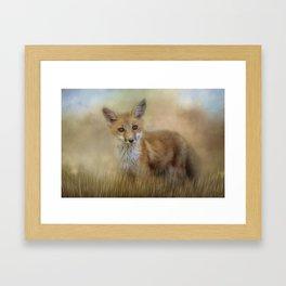 Curious Red Fox Framed Art Print