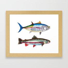 Tunnus et salmonidae Framed Art Print