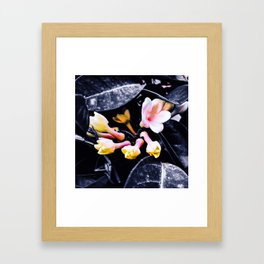 black and white leaves pink yellow white flowers jasmine Framed Art Print