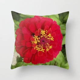 Red, RED Zinnia Throw Pillow