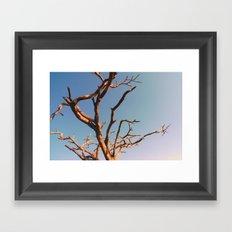 WAFU Framed Art Print