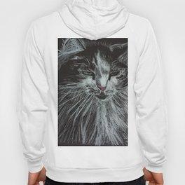 Oreo the cat Hoody