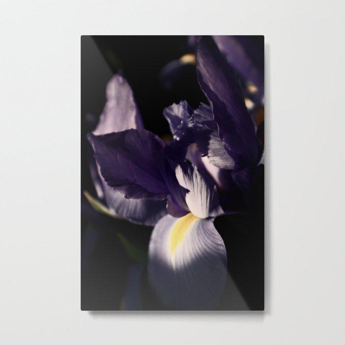 Iris #3 Metal Print