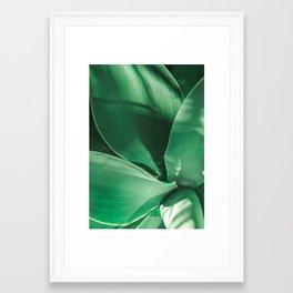 Leaves of California Agave. Framed Art Print