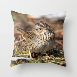 Staredown with a Lincoln's Sparrow Throw Pillow