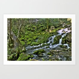 Natural Stream Art Print
