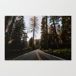 Summer Drive Through the Forest Canvas Print