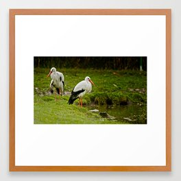 Birds in the rain Framed Art Print
