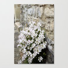 English Garden - Flowers from Stone Canvas Print