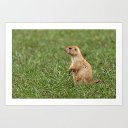 Prairie Dog on the Lookout Art Print