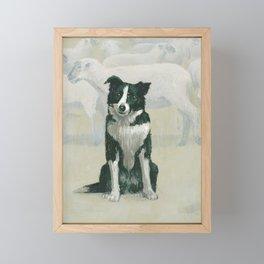 border collie herding dog Framed Mini Art Print
