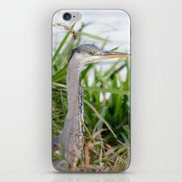 Grey heron in the reeds iPhone Skin
