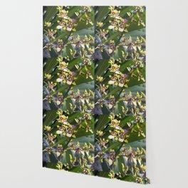 Longwood Gardens Orchid Extravaganza 68 Wallpaper