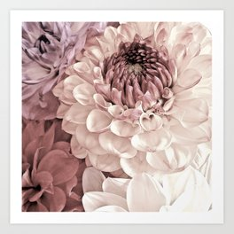 Romantic Pastel Dahlias Art Print