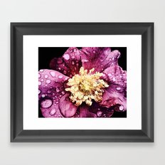 Raindrops On Deep Pink Bloom Framed Art Print