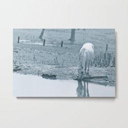 White miniature horse at pool Metal Print