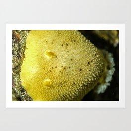 Sea lemon Art Print