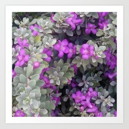 Purple Sage Art Print