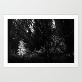 Little Redwood - Jedediah Smith Redwoods State Park Art Print