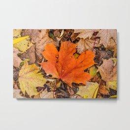Season Autumnal Fallen Leaves Metal Print