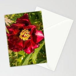 Peony (Paeonia) Stationery Cards