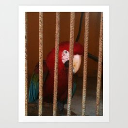 Bird Looking Out of Cage Art Print