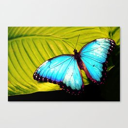 Butterfly Jungle Canvas Print