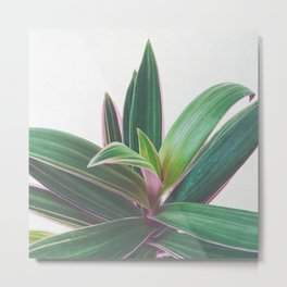 Oyster Plant Metal Print