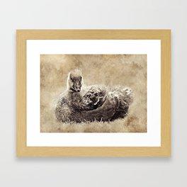 Vintage Greylag Goose Framed Art Print