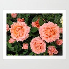 Orange roses. Summer flowers Art Print