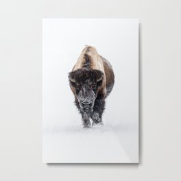 Yellowstone National Park: Lone Bull Bison Metal Print