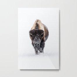 Yellowstone National Park: Lone Bull Bison Metal Print