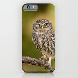 A little owl iPhone Case