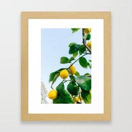 Amalfi Coast Lemons III Framed Art Print