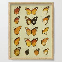 Vintage Butterfly Print - African Mimetic Butterflies (1910) - African Monarch Butterflies & Mimics Serving Tray