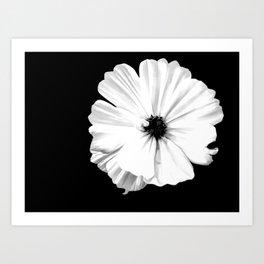 Springtime Aneomone In Black And White Art Print