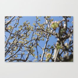 Branch Beauty Canvas Print